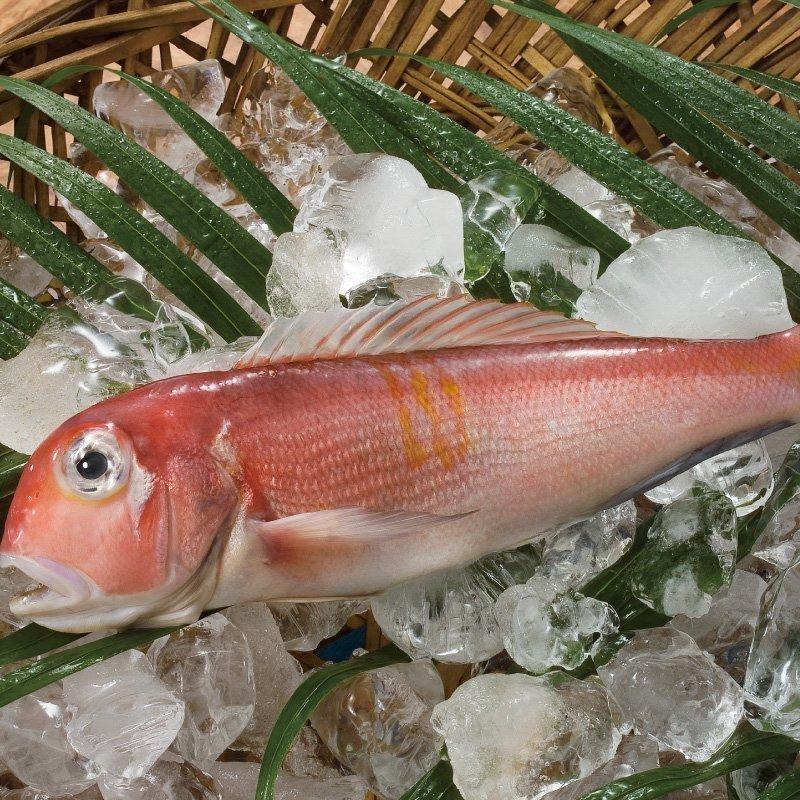 馬頭魚500g