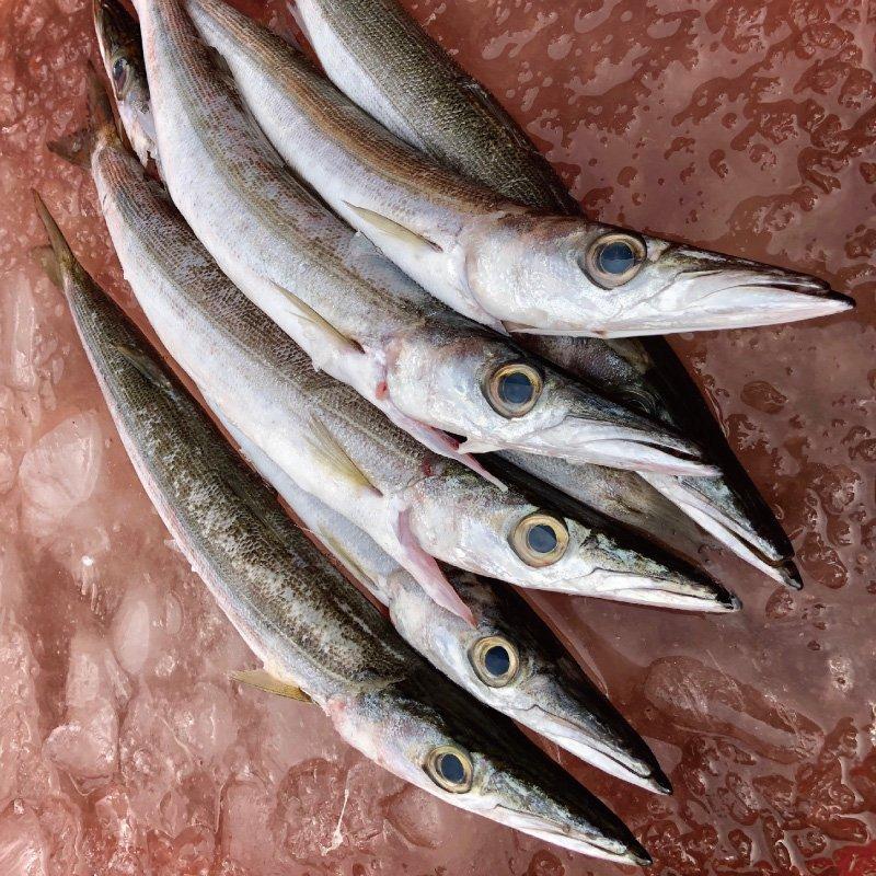 尖梭魚 400公克