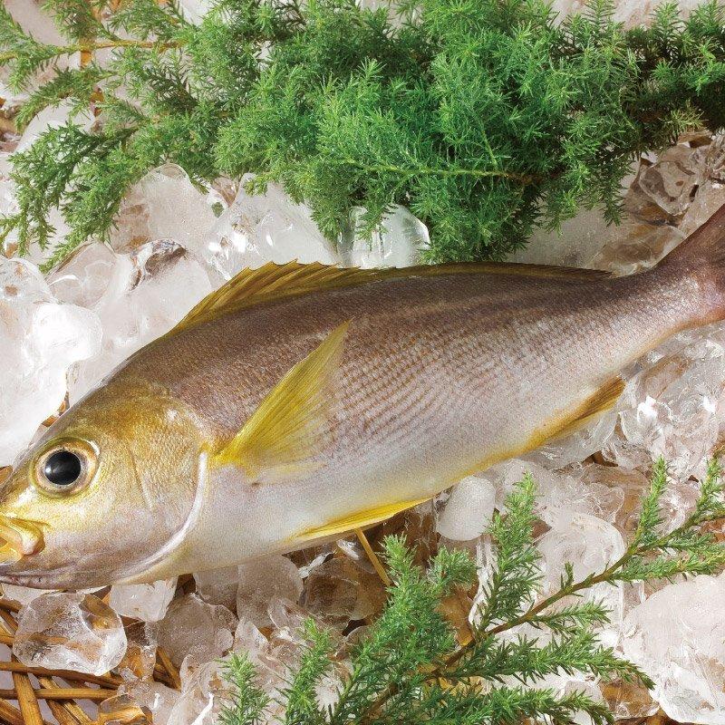 黃雞魚250g