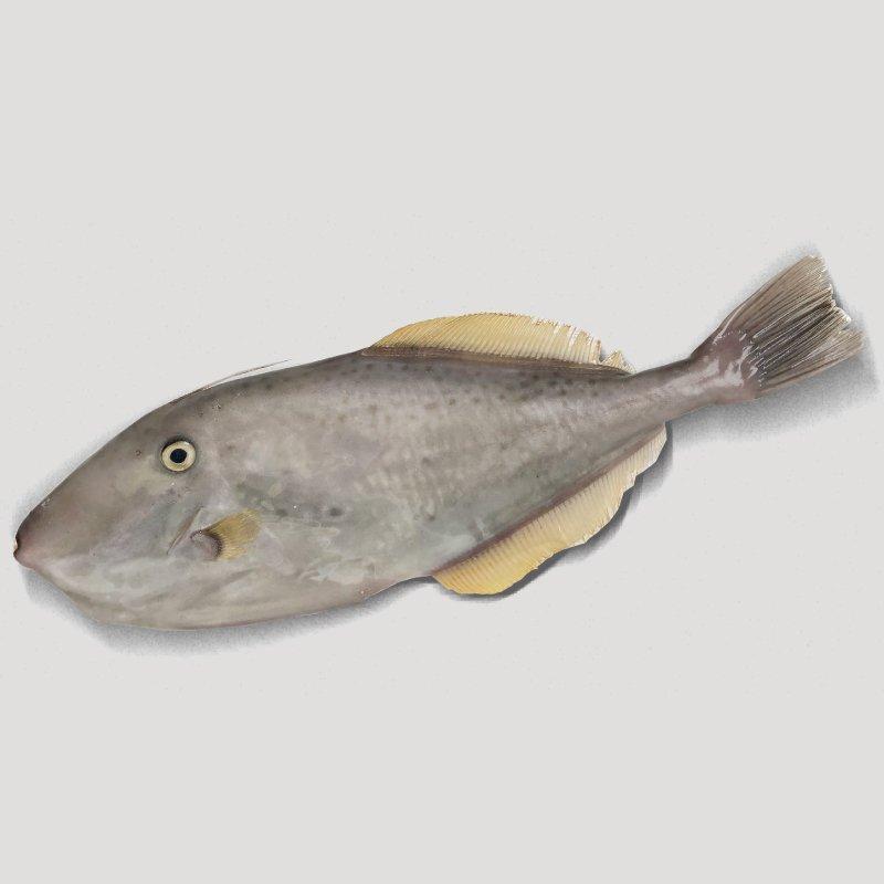剝皮魚450g